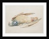 Pigeon, from The Farnley Book of Birds, c.1816 by Joseph Mallord William Turner