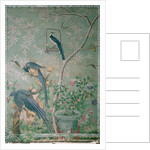 A pair of magpie jays by John James Audubon