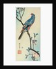 Parrot on a Branch by Ando or Utagawa Hiroshige