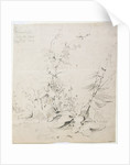Study of Weeds, Kirkstall, 1803 by John Sell Cotman