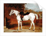Ali, Portrait of a Horse by English School