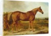 Silvertail, Portrait of a Horse by English School