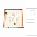 Drawer Of Caterpillars by Sara Porter