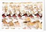 Drawer Of Moths by Sara Porter