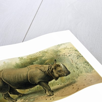 Indian Rhinoceros by Anonymous