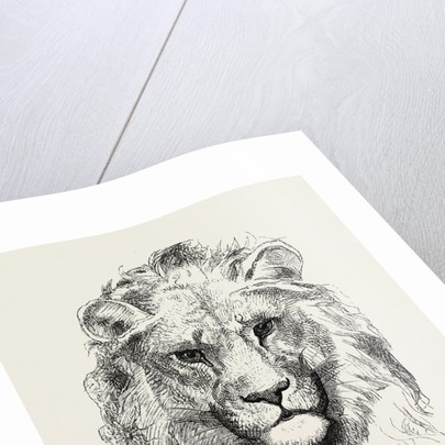 A Modern Lion by Anonymous