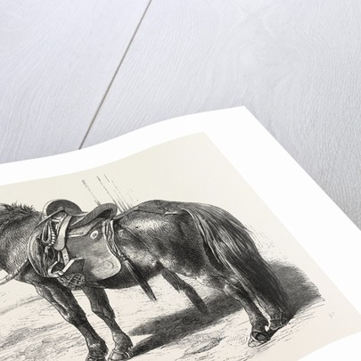 Japanese Horse, 1861 by Anonymous