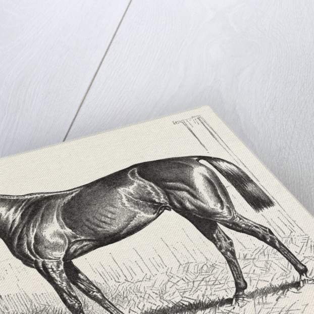 An American Racer in England, Mr. Keene's Foxhall, Winner of the Bretby Nursery Plate, Drawn H. Stull by Anonymous