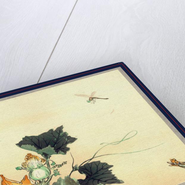 Kabocha ni tonbou, Dragonfly and pumpkin by Ogata Gekko