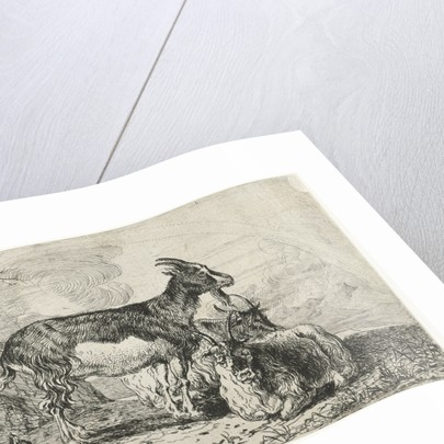 Goats by Jan van den Hecke I