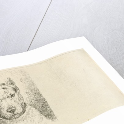 Dogs head with collar by Johannes Mock