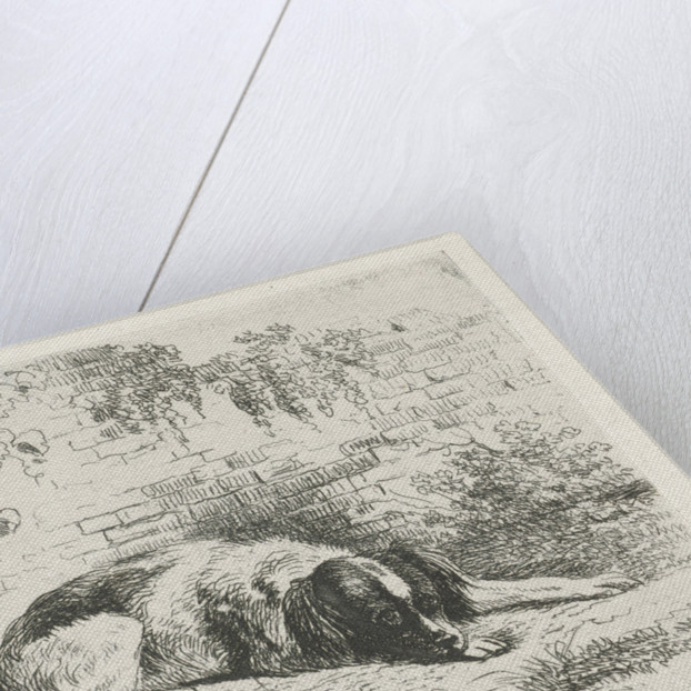 Reclining dog in front of a wall by Christiaan Wilhelmus Moorrees