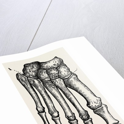 Bones by Anonymous