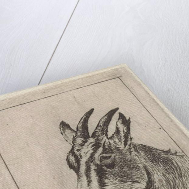 Goats head by Pieter Janson