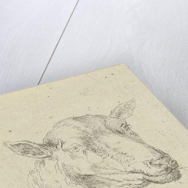 Head of a sheep by baron Reinierus Albertus Ludovicus van Isendoorn à Blois