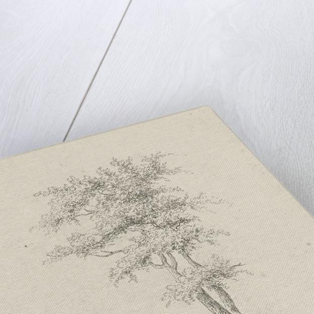 Two trees by baron Reinierus Albertus Ludovicus van Isendoorn à Blois