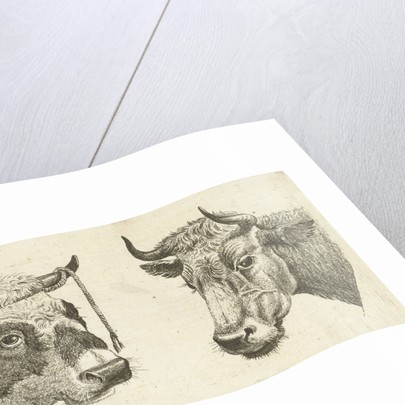 Head of a bull with rope to horns and head of cow by Cornelis Bisschop