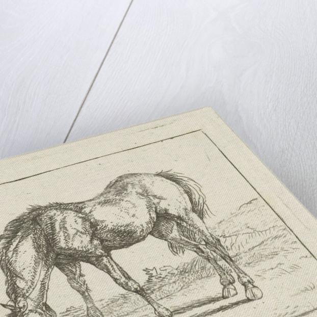 Grazing horse by Jan Dasveldt
