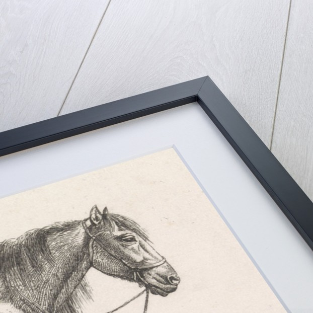 Saddled horse by George Jooss