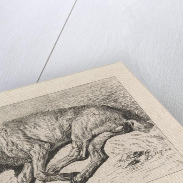 Sleeping dog, George Jooss by Johannes Mock