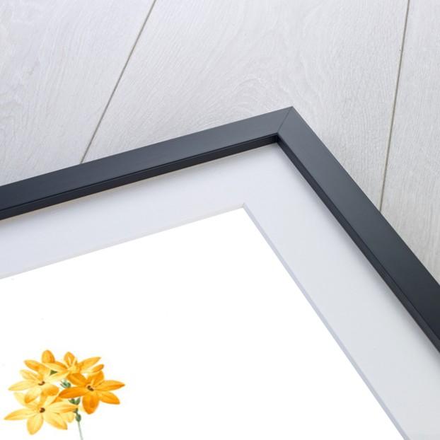 Ixia dubia, Ixia lutea; Ixea doubteuse Yellow corn flower; Kalossies by Pierre Joseph Redouté