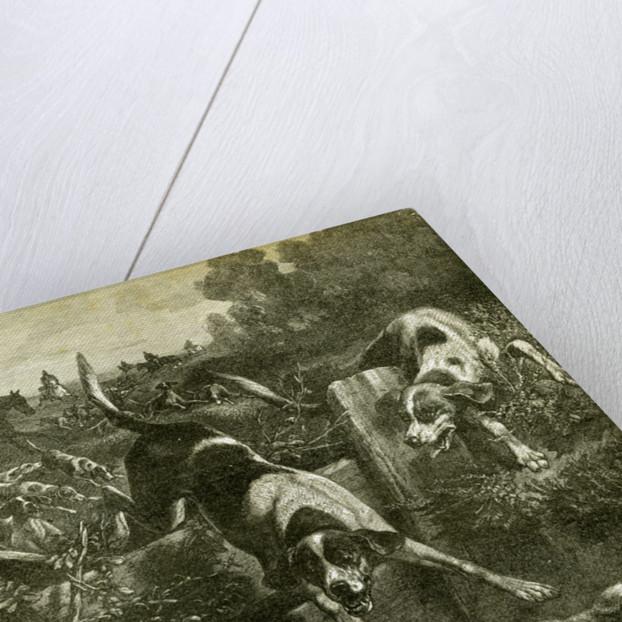 Hunt Austria Fox 1891 by Anonymous