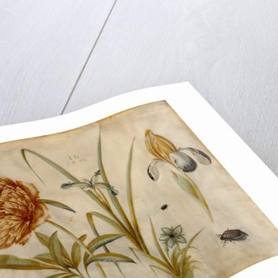 Flowers and Beetles by Hans Hoffmann