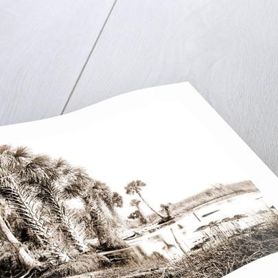 Shore line along Lake George, Fla, Jackson, Palms, Lakes & ponds, United States, Florida, 1880 by William Henry