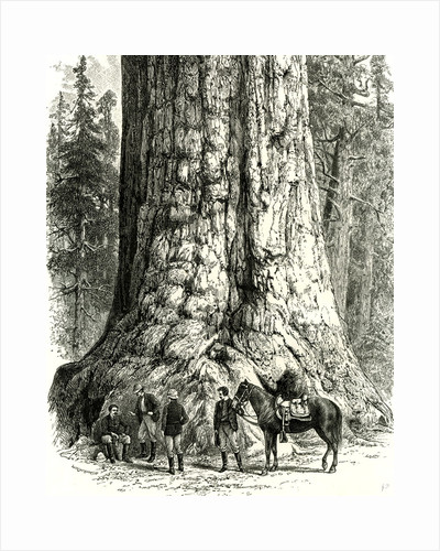 Yosemite Valley the Grizzly Giant USA 1891 by Anonymous