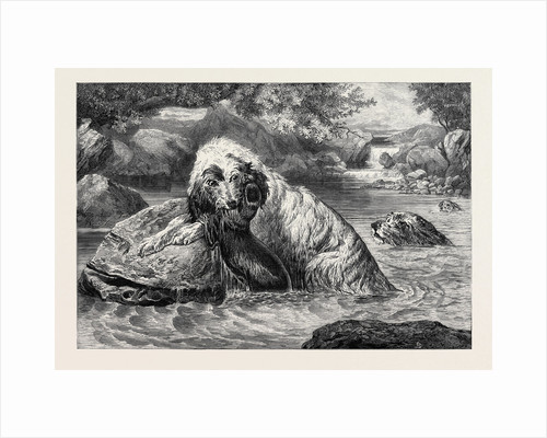 Otter Hounds, 1873 by Anonymous