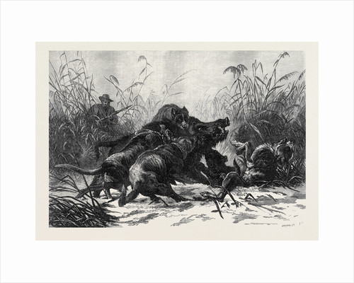 A Boar Hunt by Anonymous