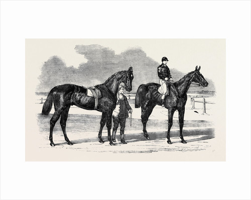 The Winners of the Derby and the Oaks, Musjid the Winner of the Derby Summerside the Winner of the Oaks by Anonymous