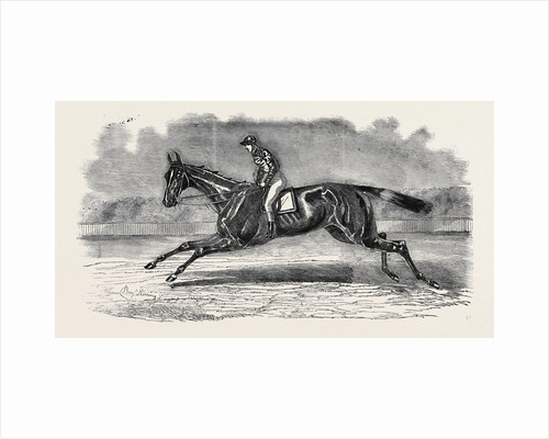 The Winner of the Newmarket July Stakes, Lord John Scott's B.C. Brother to Elthiron by Anonymous