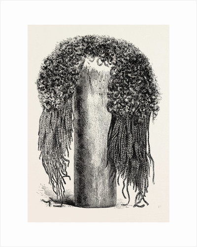 Old Egyptian Lady's Wig by Anonymous