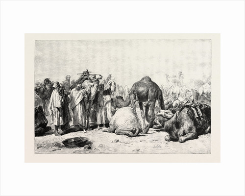 Camel Market by Anonymous