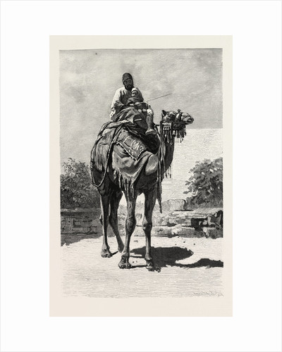 Camel Rider by Anonymous