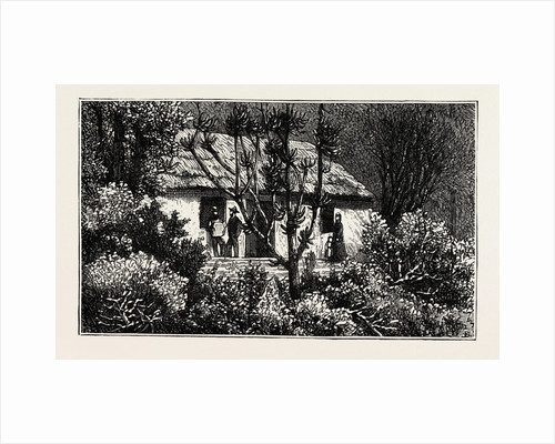 A Cottage in the Bush, Cape Colony, South Africa by Anonymous