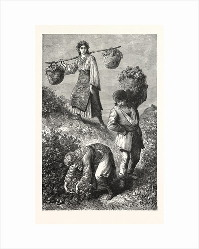 Gathering Roses in Roumelia by Anonymous