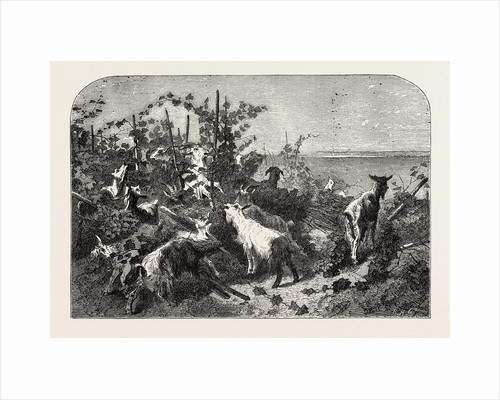 Salon of 1855. Goats, Engraving 1855 by Anonymous