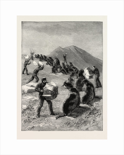 The American Fisheries Question, Driving Seals to the Killing Place, Behring's Straits, United States by Anonymous