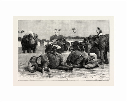 Elephants in India, the Morning Bath Before Breakfast by Anonymous