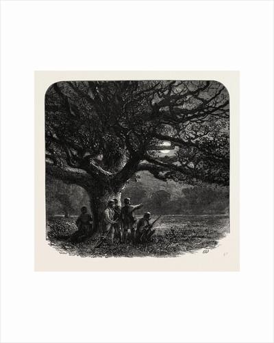 The Watch Oak, Windsor by Anonymous