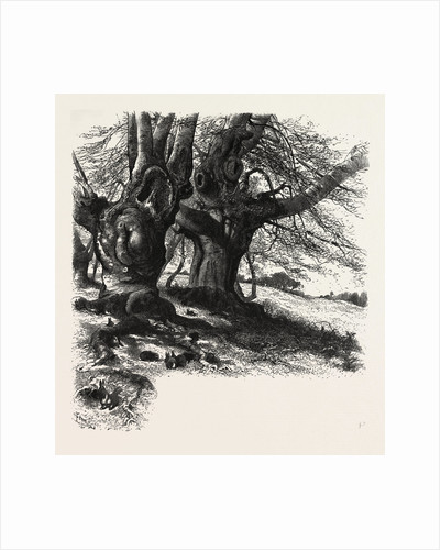 Burnham Beeches, the Forest Scenery of Great Britain by Anonymous
