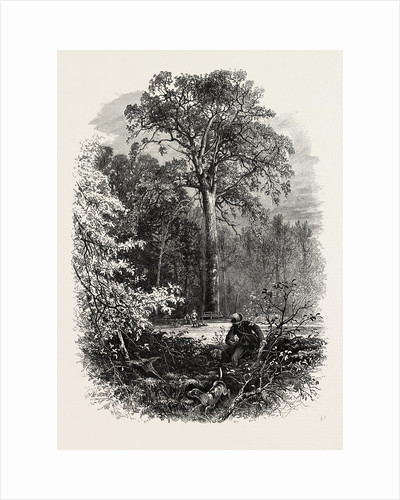 The Victoria Oak, Windsor Forest, the Forest Scenery of Great Britain by Anonymous
