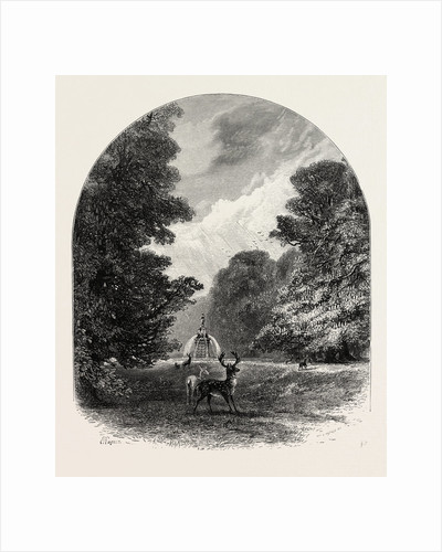 The Chestnuts in Bushey Park, the Forest Scenery of Great Britain by Anonymous