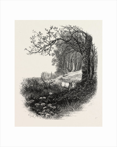 High Beech, Epping Forest, the Forest Scenery of Great Britain by Anonymous