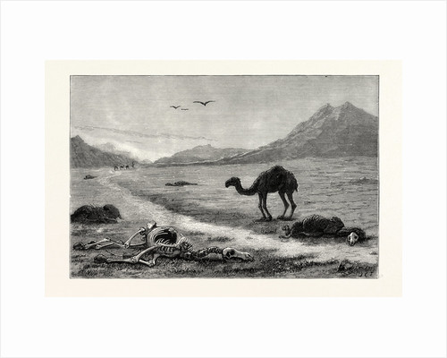 A Camel Left to Die, an Incident in the Afghan War, Afghanistan by Anonymous