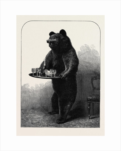 A Dumb Waiter Bear Shot by Lord Suffield in Russia During the Marriage Festivities of the Duke of Edinburgh by Anonymous