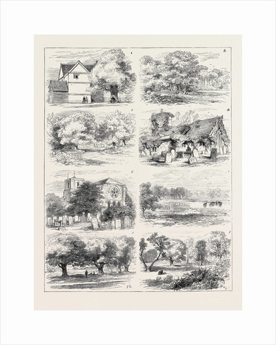 The Preservation of Epping Forest by Anonymous