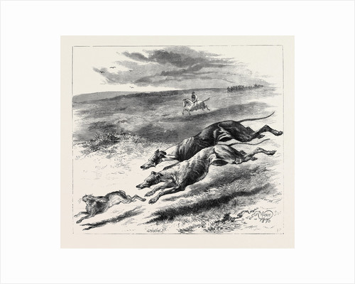 Coursing, 1870 by Anonymous
